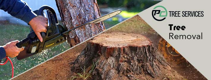 Tree Cutting Melbourne